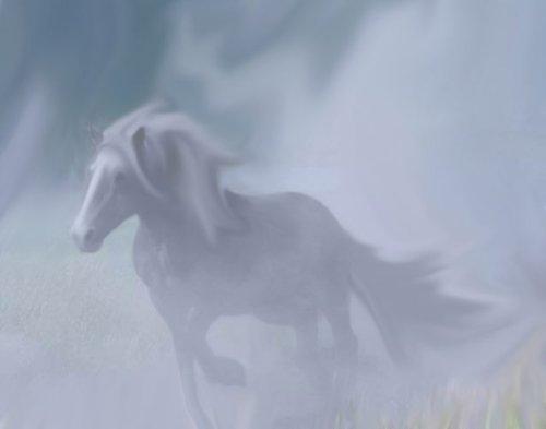 ghost horse Danielle Fekete